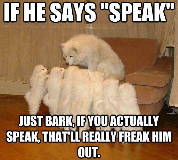 Bark! Don't speak - meme