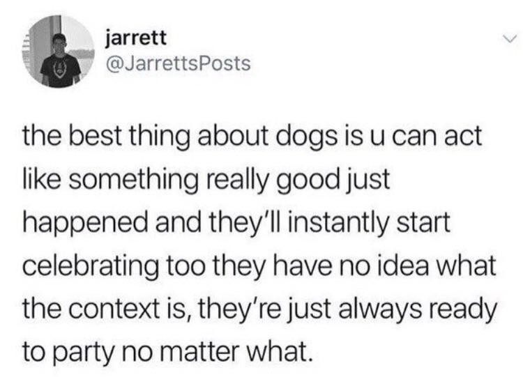 Party dog - meme