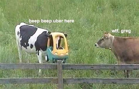 cow cow - meme