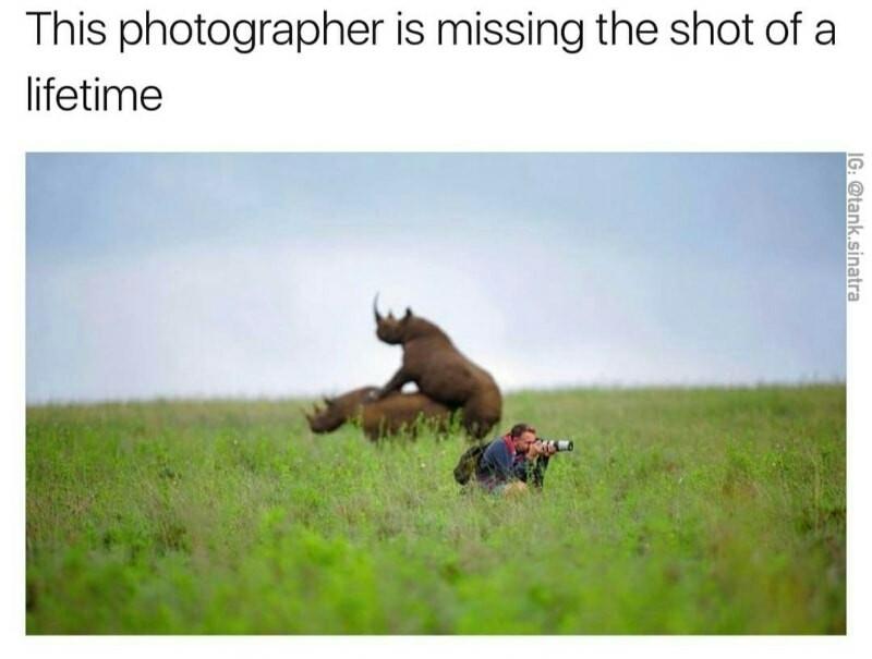 For Rhinocock.Owner - meme