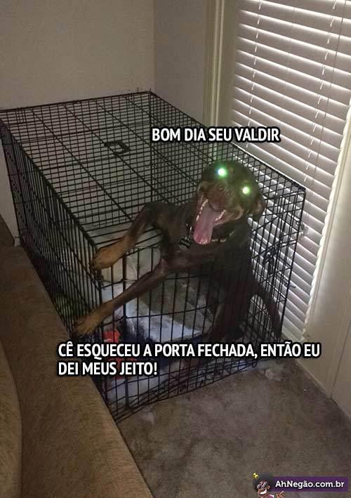 Cachorros #1 - meme