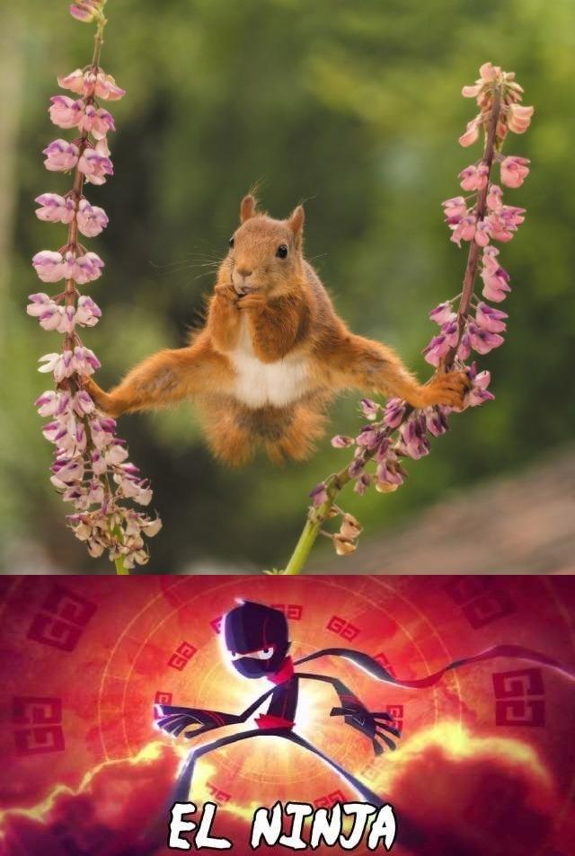 Ninja ardilla - meme