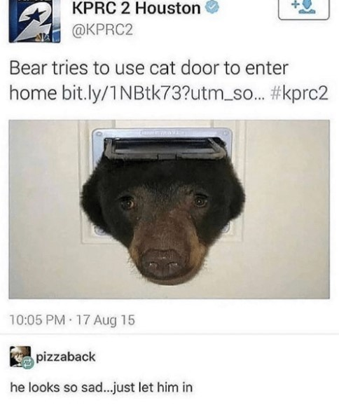 Bear tries to use cat door to enter home - meme