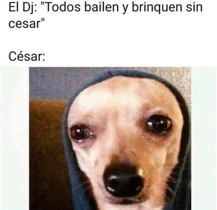 Cesar - meme