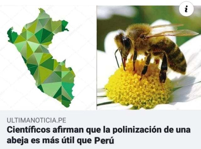 Tremendas capos las abejas - meme