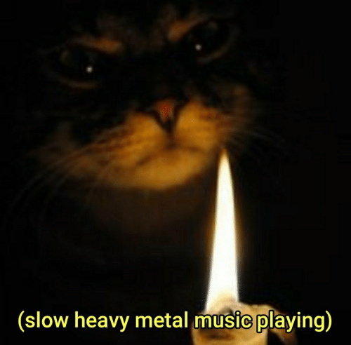 Catto candle - meme