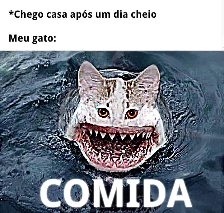 Gatubarão - meme