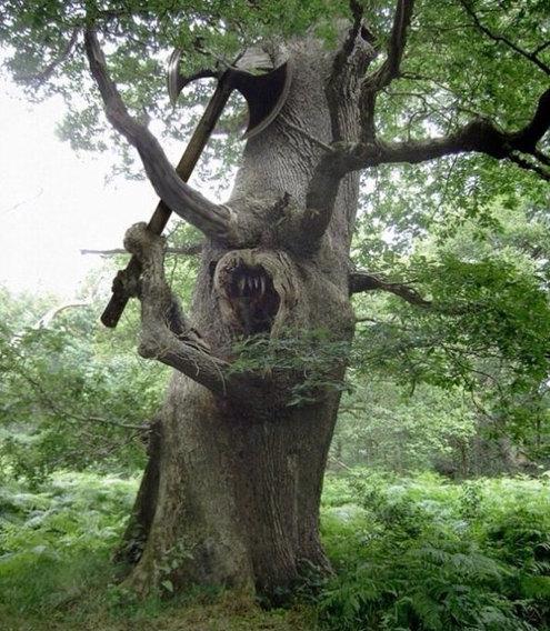 Samurai tree - meme