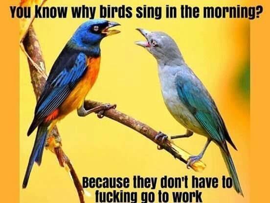 that's why birds sing - meme