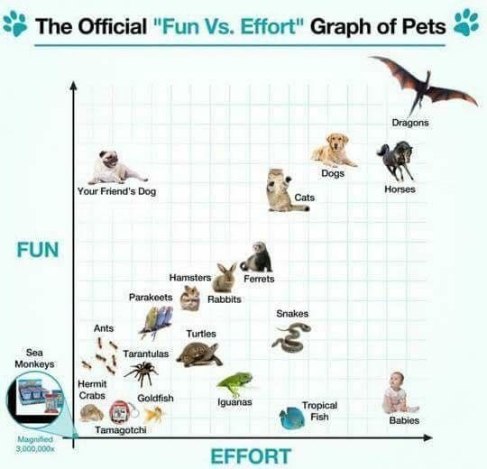 Fun vs Effort graph of Pets - meme