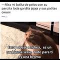 Mi gato siempreee