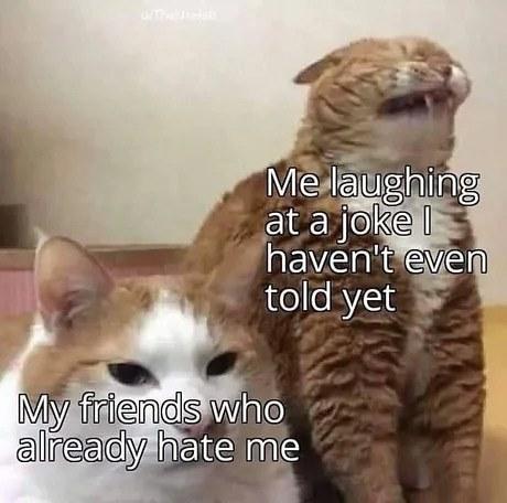 Funny cattu meme