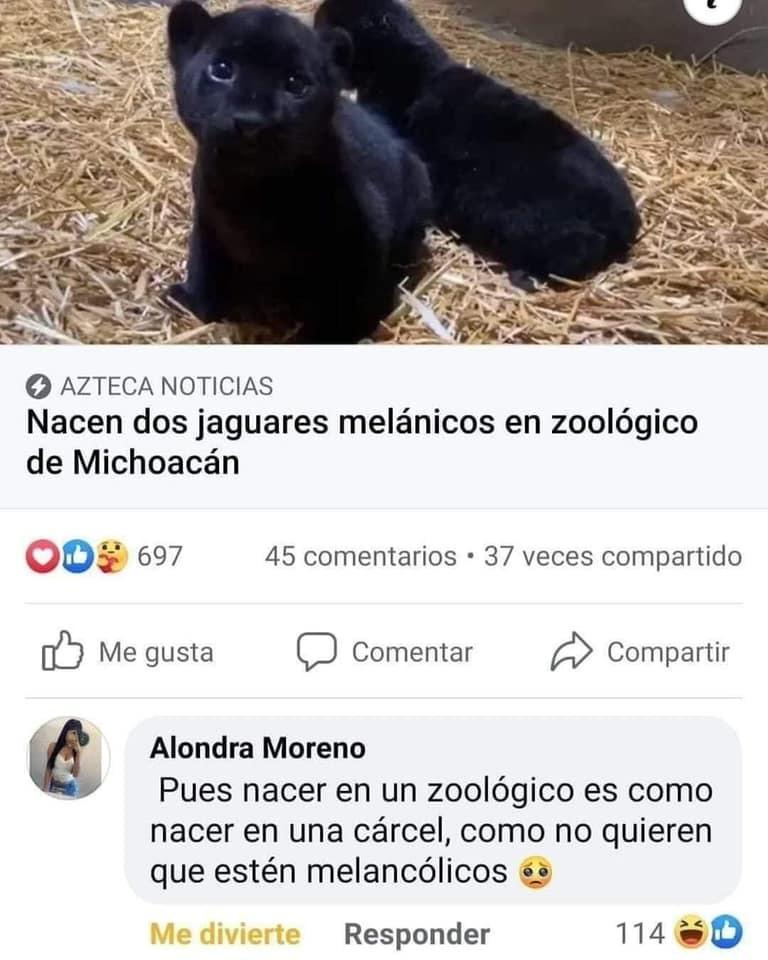 Estos animalistas - meme