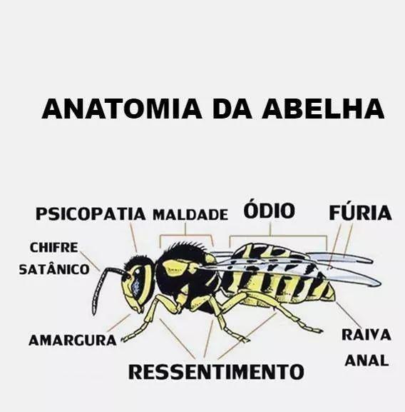 Abelha - meme