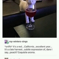 Cat likes the smell of red wine