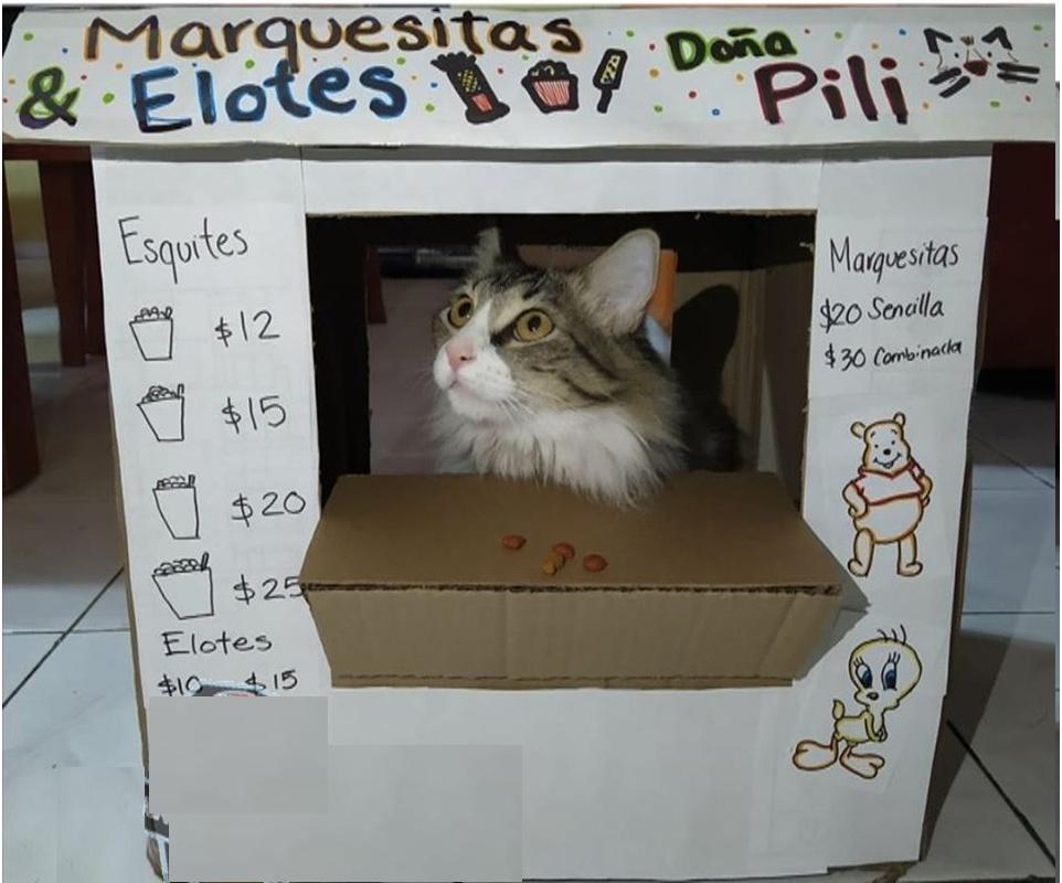 ¿que le comprarias a este gatito? - meme