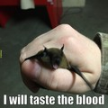 Bad little bat, no blood for you!