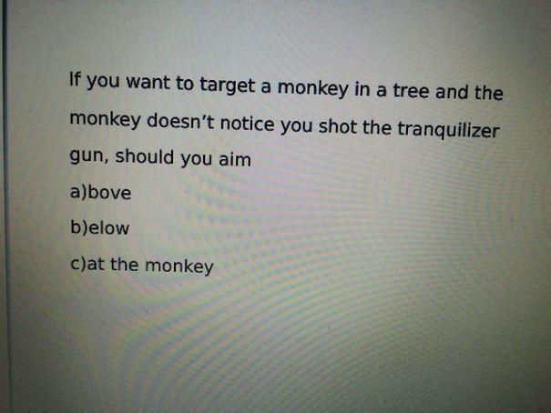 cat the monkey - meme