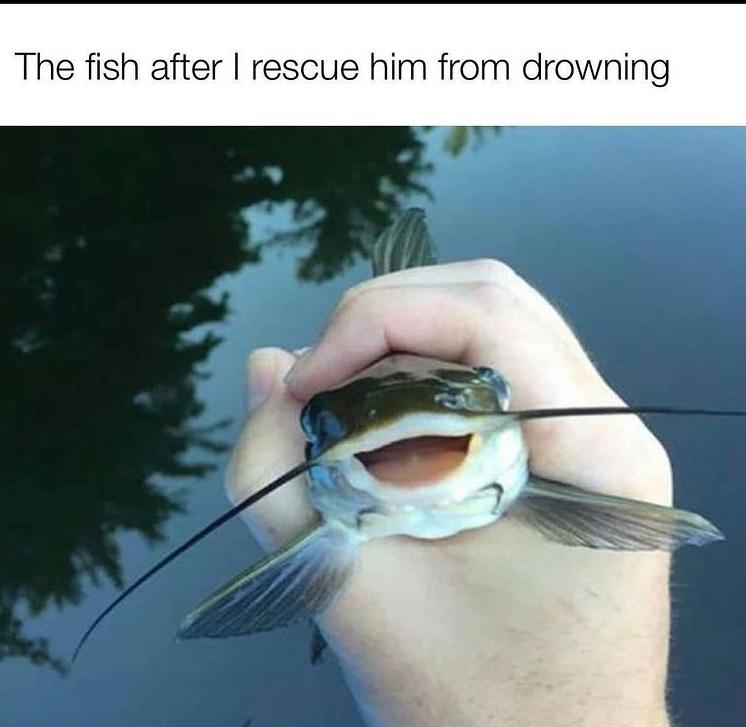 he's so happy to die - meme