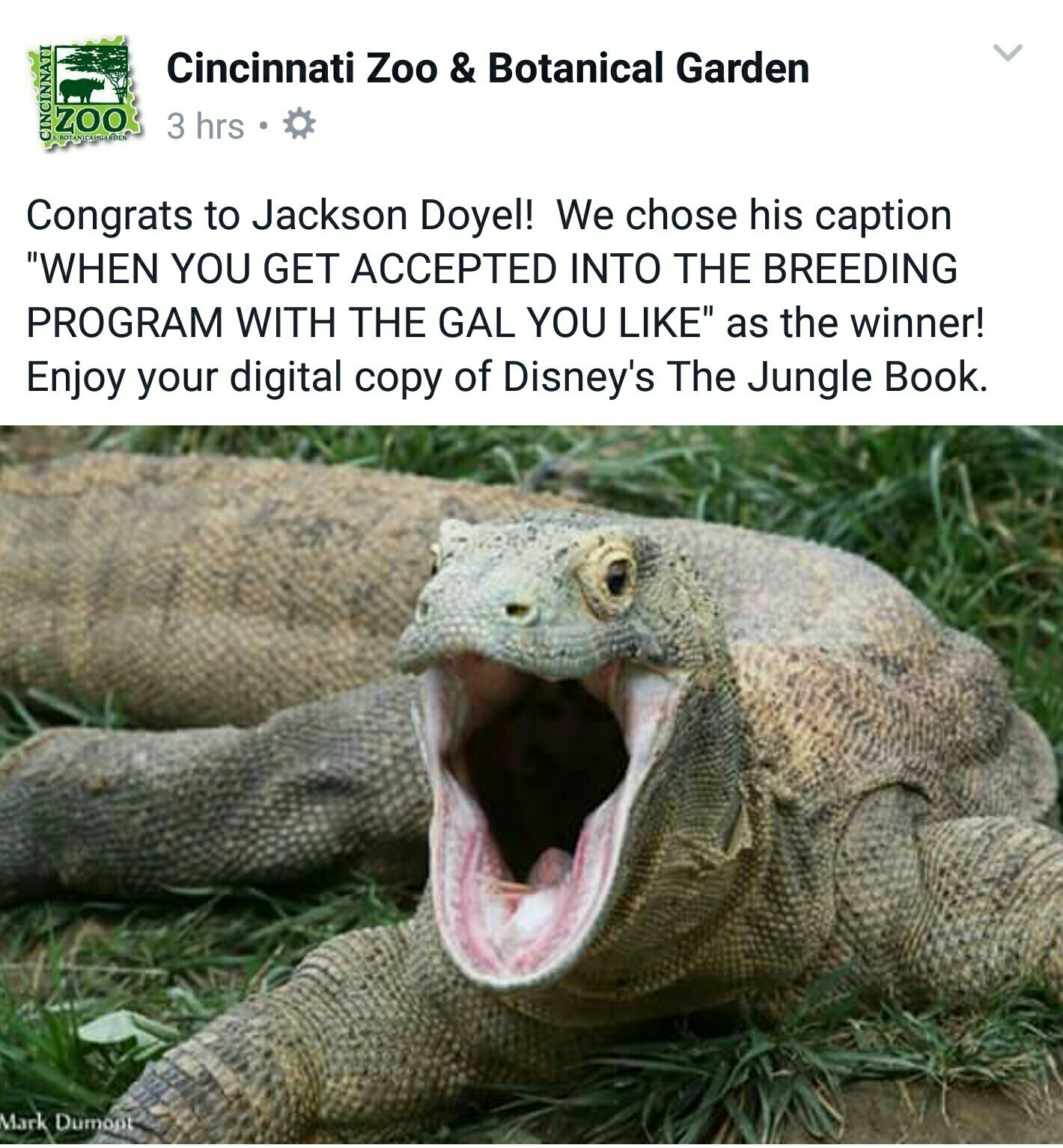 Harambe would've loved to be accepted into his breeding program smh - meme