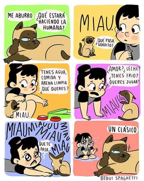 La vida de un gato - meme