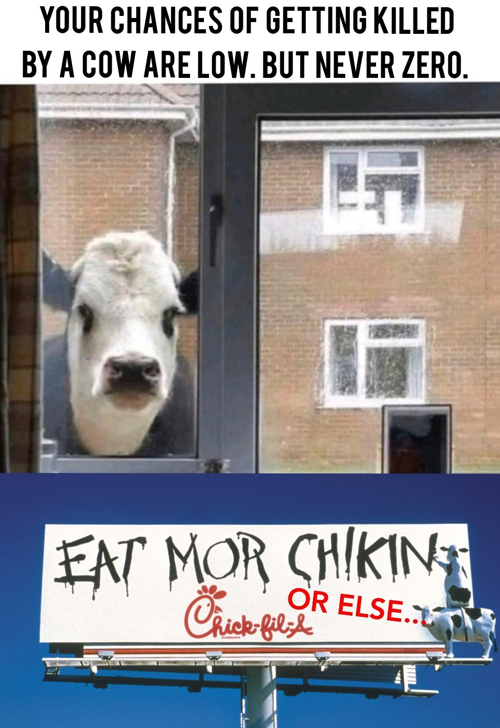 Chic fil la cows out for serious blood - meme