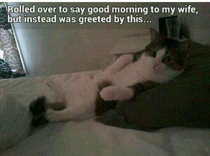 Meow - meme