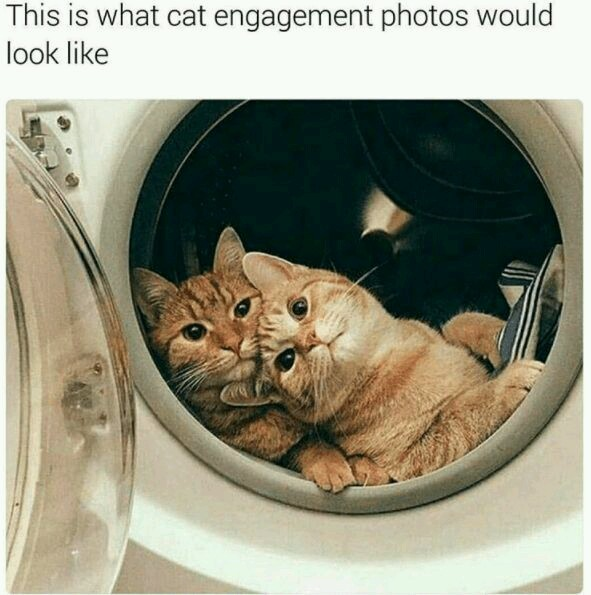 Cute cats - meme