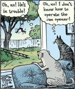 Dogs care - meme
