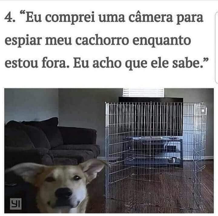 Cachorro esperto - meme