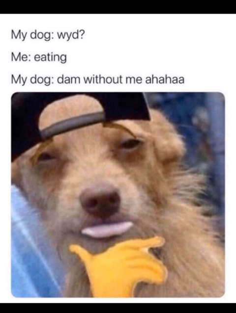 A pack of condoms for dogs please - meme
