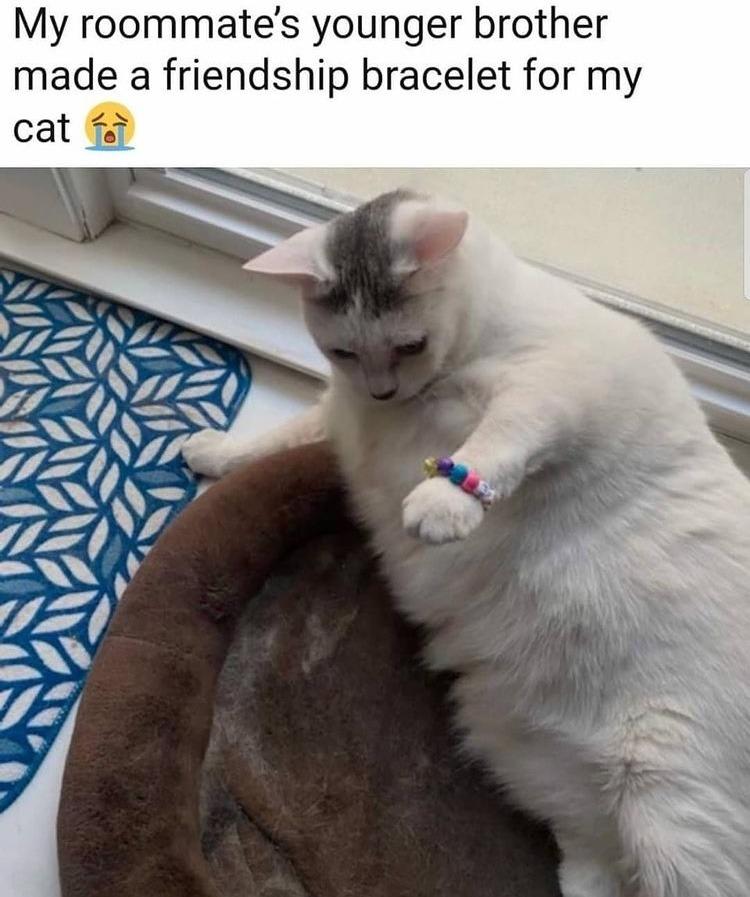 best friends forever - meme