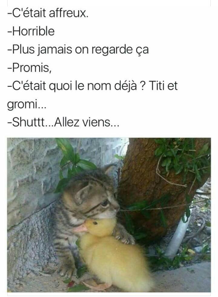 Titi et grominet - meme