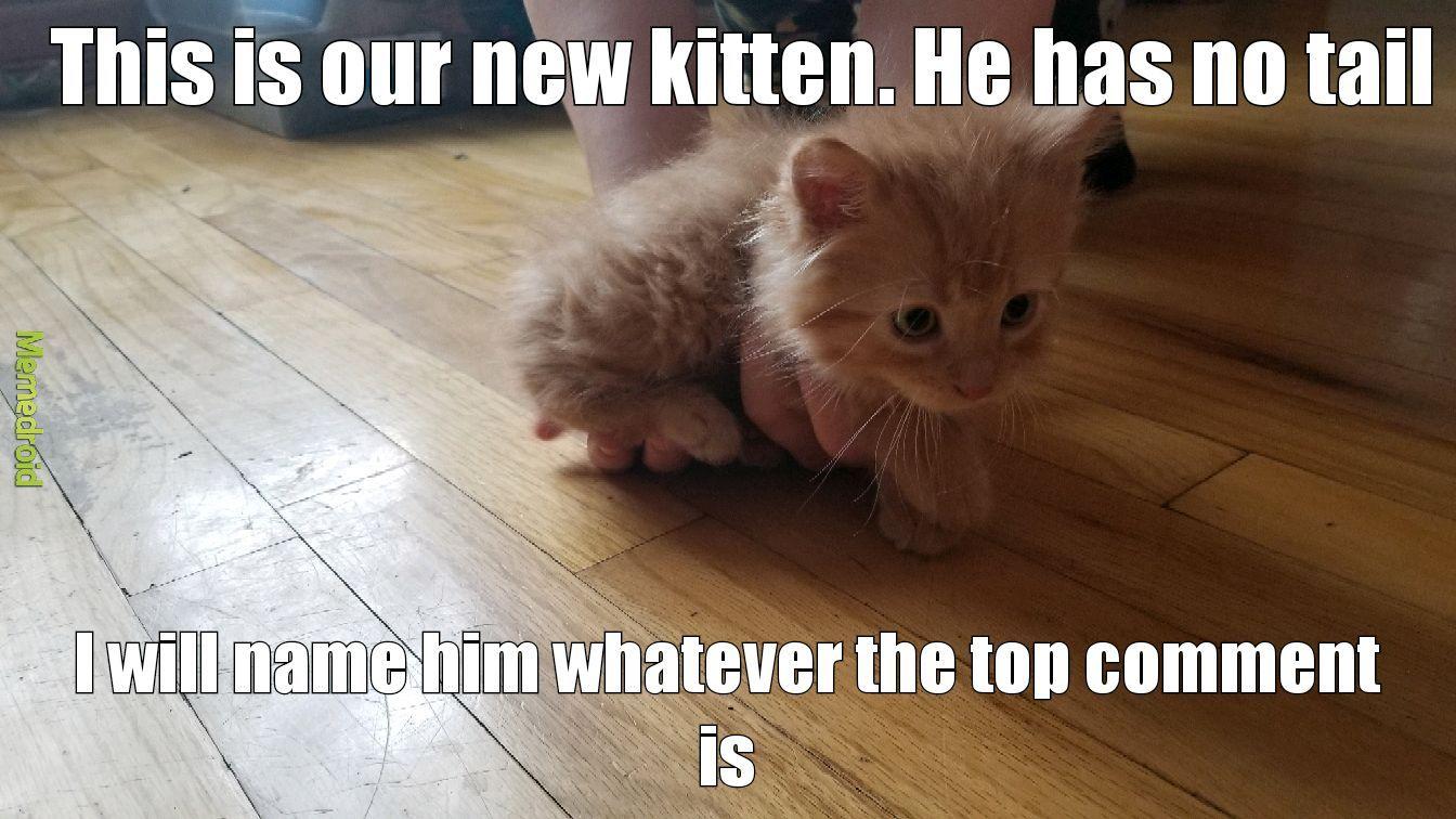 Cat cat cat cat kitty - meme