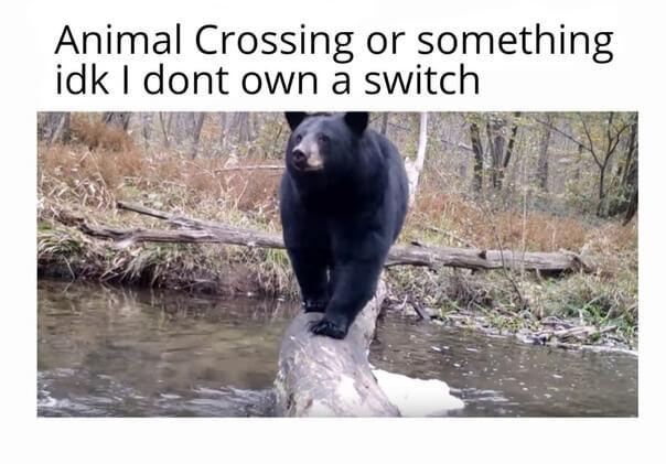 Bears are scary - meme