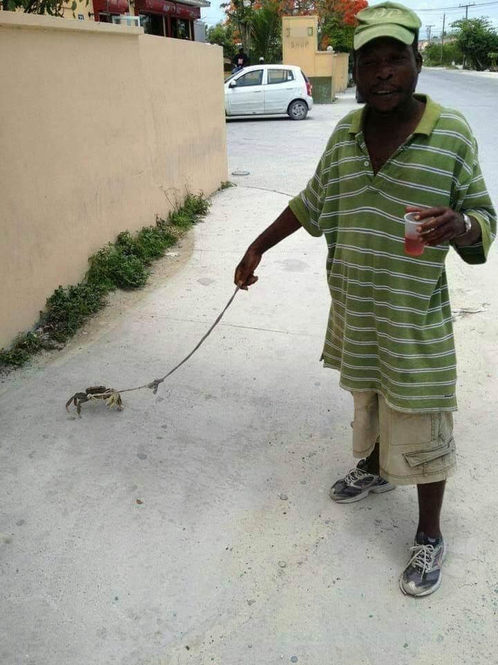 Cangrejo mascota cangrejo mascota - meme