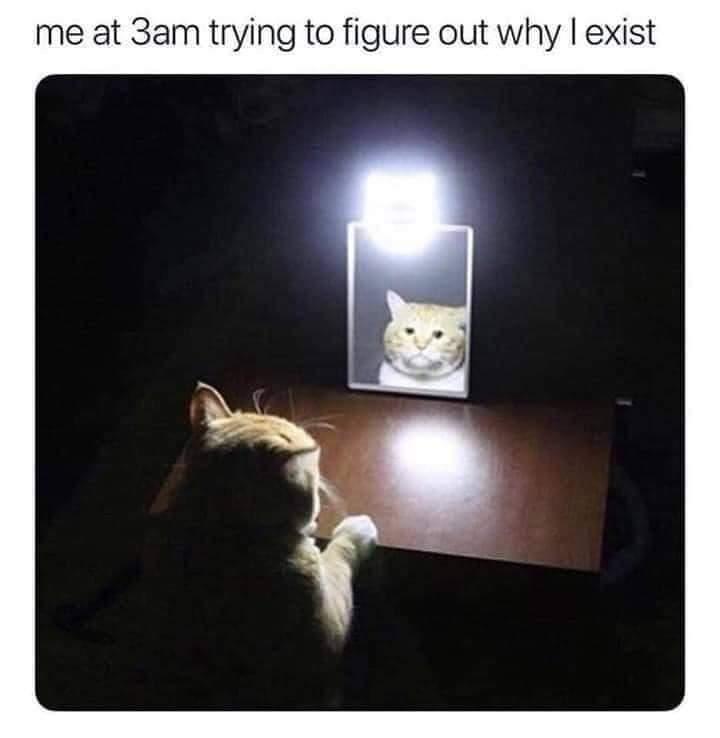 I want a kitty - meme