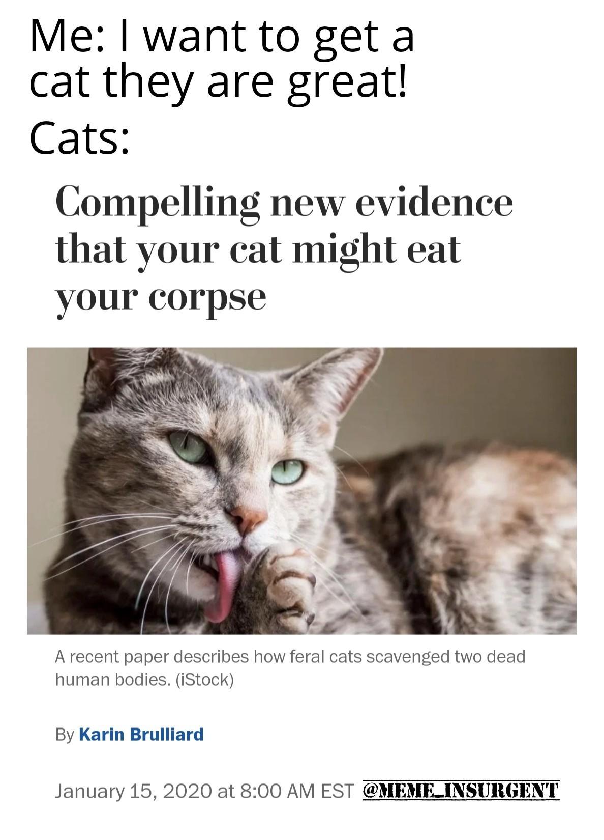 Cats! - meme