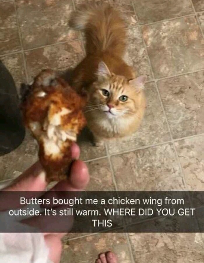 Cat steals neighbours chicken - meme