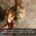 Cat steals neighbours chicken
