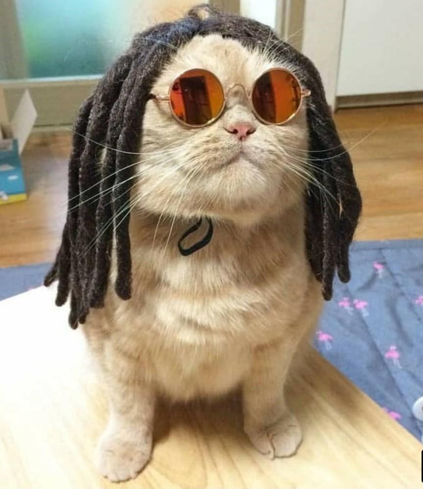 I'm a Bob cat - meme