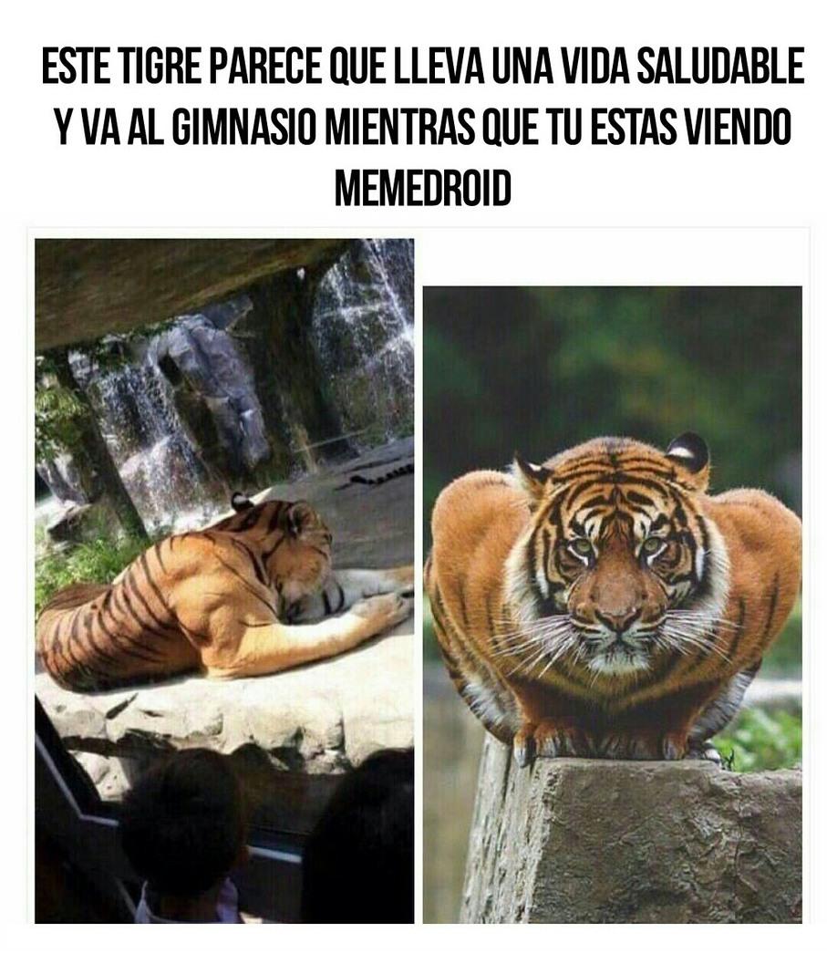 Tigre pesoca :v - meme