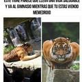 Tigre pesoca :v