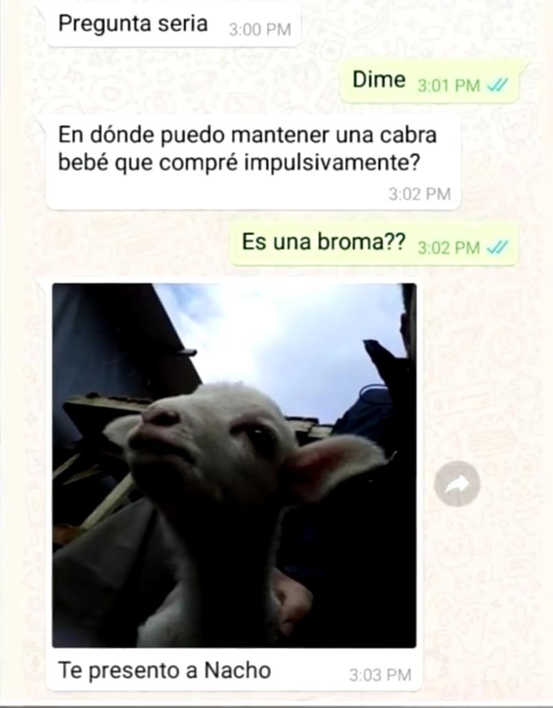 La cabra - meme