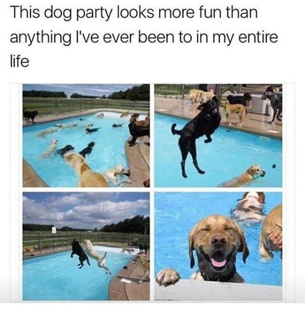 Dog life - meme