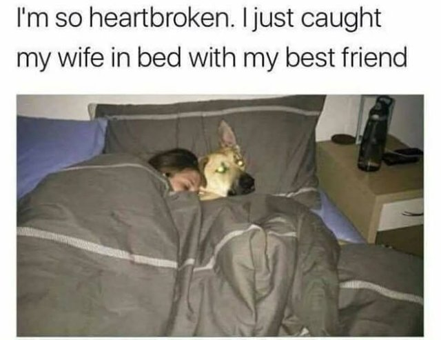 I just caught my wife in bed with my best friend - meme