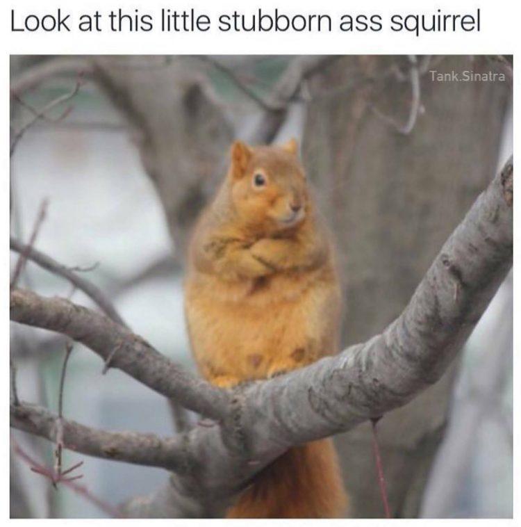 Stubborn - meme