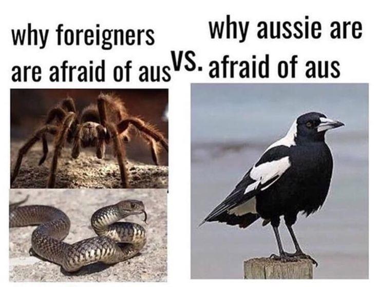 Winged terror - meme