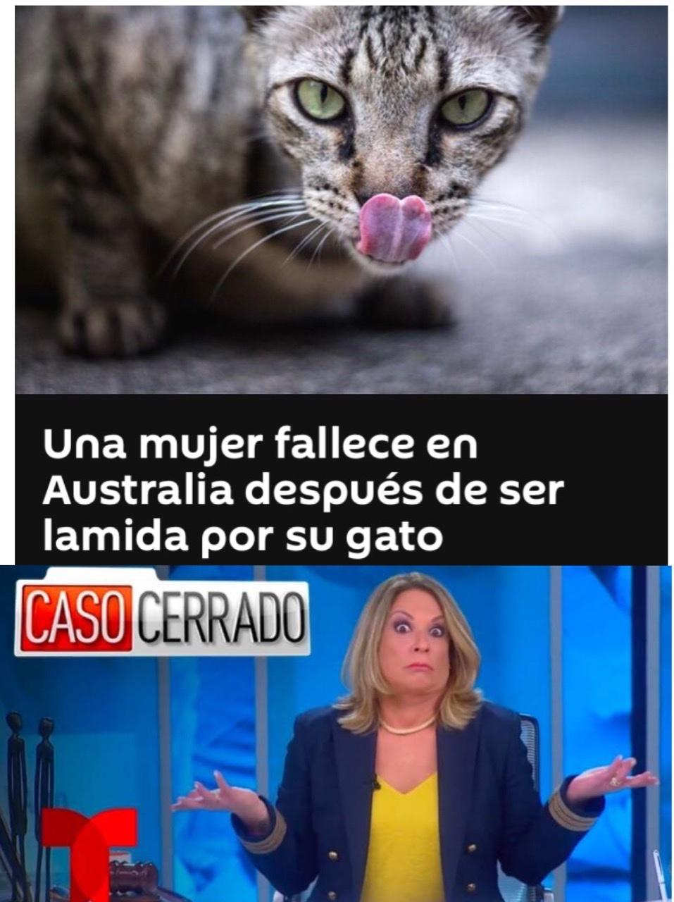 Lindo gatito - meme