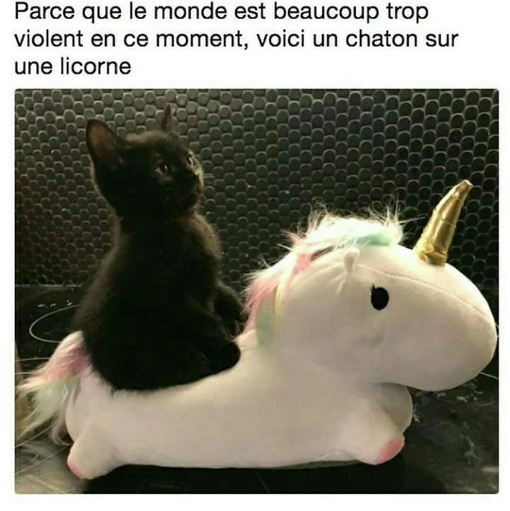 Chatonlicorne - meme